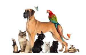 Pet Services In Middlesex County NJ