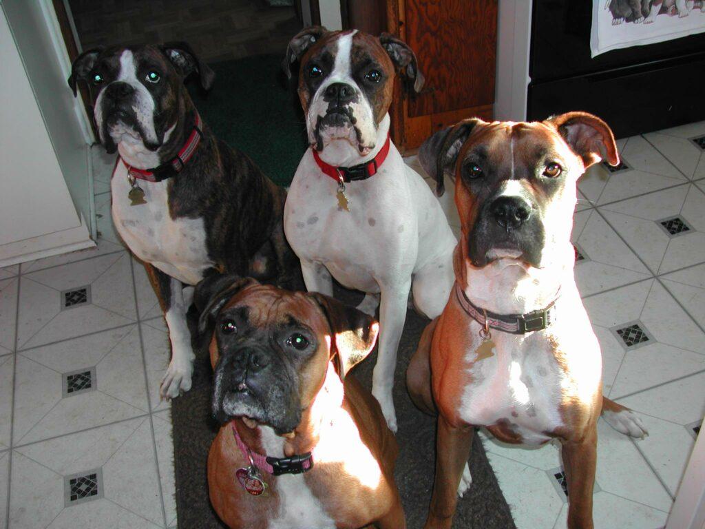Best Dog Walker In Middlesex County NJ
