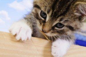 Cat Sitters in Middlesex County NJ