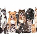 pet services middlesex county nj