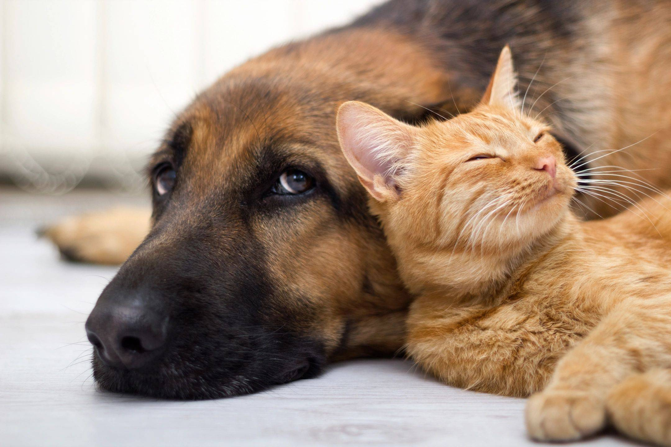 Middlesex County NJ's Best Pet Sitters & Dog Walkers